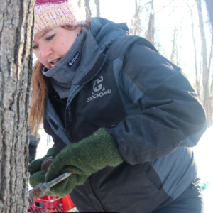 The hundreds of maple trees in Bagley make a great place for maple syrup production.