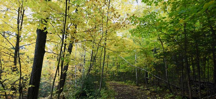 Hartley Trail in Fall