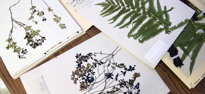 Herbarium Plant Archive