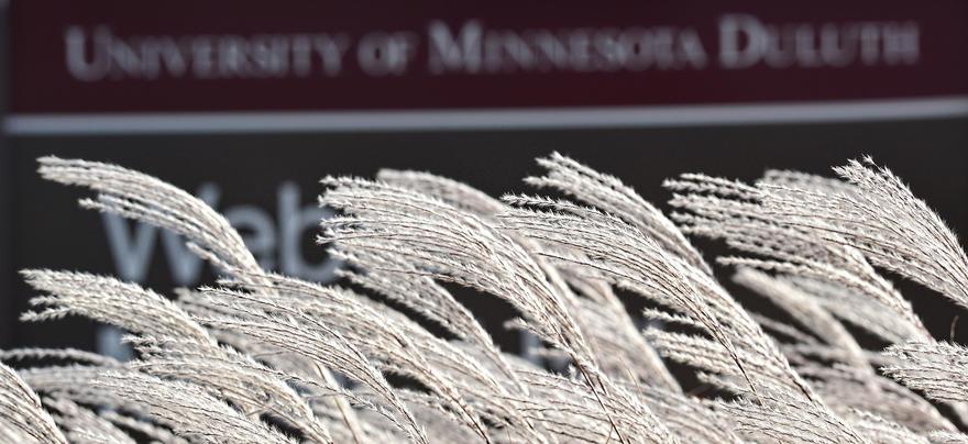 UMD Campus Grass & Sign