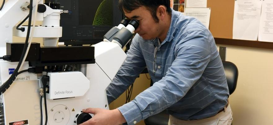 Shimo Using Microscope