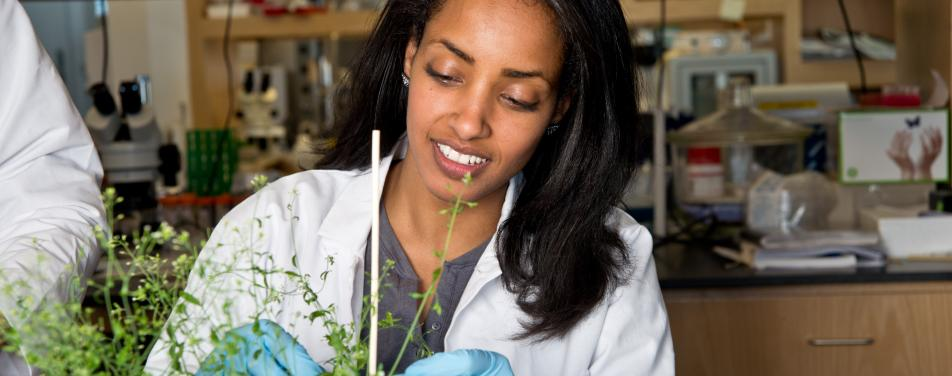 Student working on plants in a lab