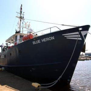 Blue Heron at Dock