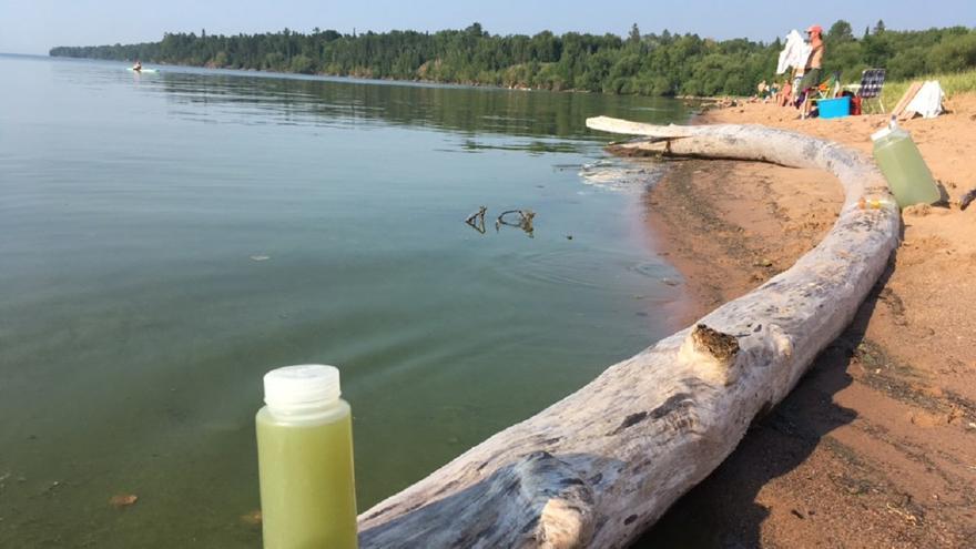 Algae Bloom on Lake Superior