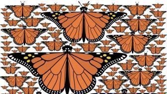 fractal monarchs