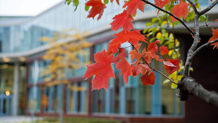 photo of leaves that have changed color in front of a UMD building