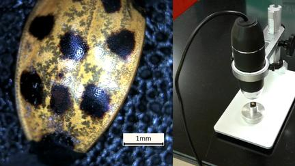 USB-powered microscope and image of asian beetle